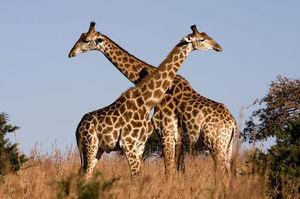Visit Kruger park, in South Africa
